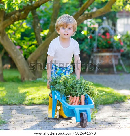 Adorable little kid boy with carrots in domestic garden. Child gardening and eating outdoors. Healthy organic vegetables for kids - stock photo