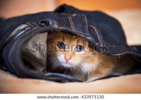 Adorable little kitten with blue eyes sleeping in a jeans - stock photo