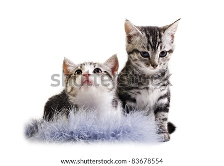 Adorable little kittens on white background with space for text