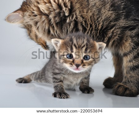 Adorable little newborn kitten with mother taking care of it. Studio shot.  - stock photo