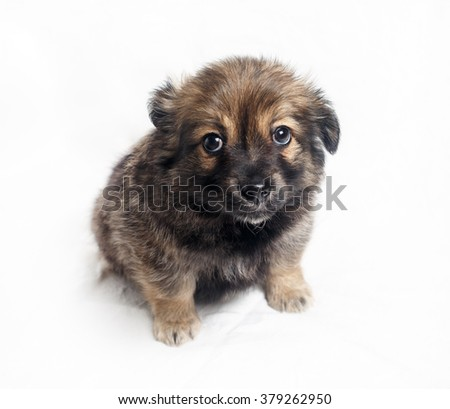 Adorable little puppy dog with sad eyes against a white sheet background. Selective focus. - stock photo