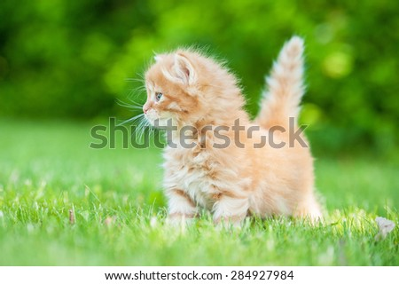 Adorable little red kitten walking outdoors - stock photo