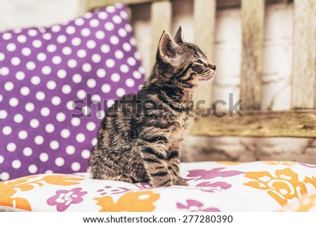 Adorable little striped grey tabby kitten enjoying a warm spring day sitting on a colorful cosh on a garden chair on a patio, side view looking up - stock photo