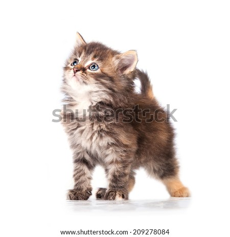 Adorable little tabby kitten looking up - stock photo