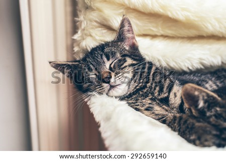 Adorable little tabby kitten lying fast asleep on a warm blanket covering a chair with its head resting on the side - stock photo