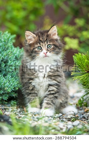 Adorable little tabby kitten sitting in the yard - stock photo