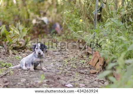 Adorable mixed breed puppy in the yard. - stock photo