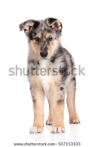 adorable mixed breed puppy standing on white