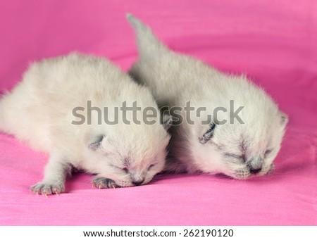 Adorable newborn blinding kittens on pink blanket - stock photo