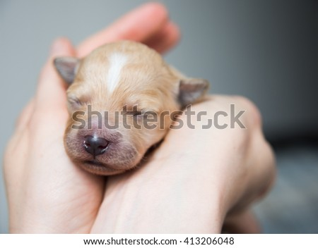 Adorable Newborn Puppy Sleeping - stock photo