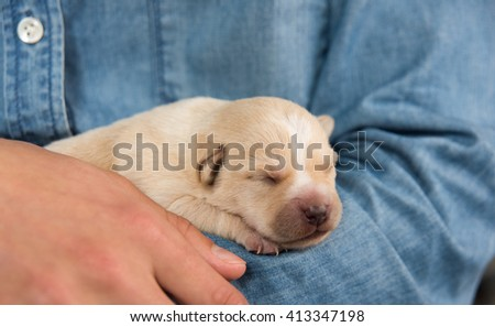 Adorable Newborn Puppy Sleeping while Being Held