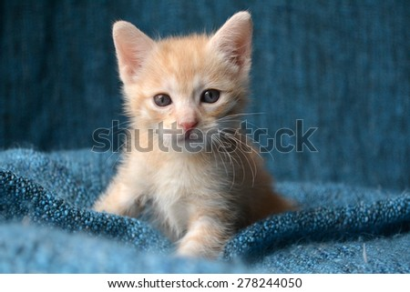 Adorable portrait of young orange striped tabby kitten - stock photo