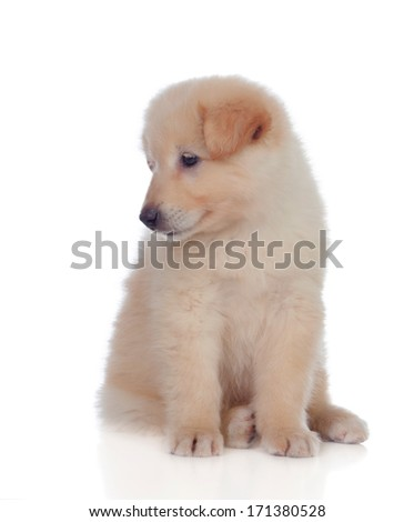 Adorable puppy dog �¢??�¢??with smooth hair isolated on white background - stock photo