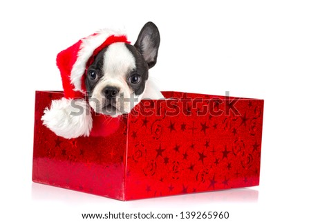 Adorable puppy in Christmas present box - stock photo