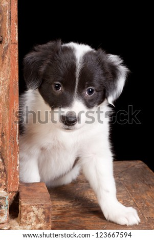 Adorable puppy like in the song how much is that doggy in the window - stock photo