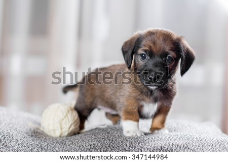 Adorable puppy on a light soft background - stock photo