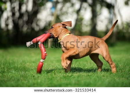 adorable puppy playing with a toy outdoors - stock photo