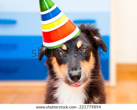 Adorable puppy wearing festive hat - stock photo