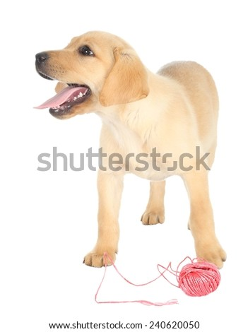 Adorable puppy with a ball of red string - stock photo