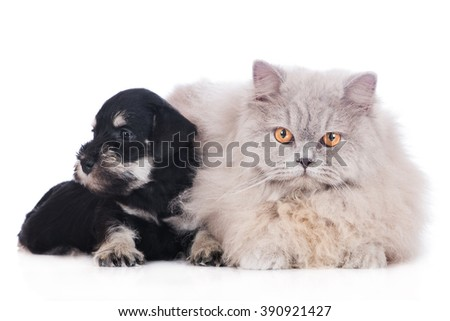 adorable puppy with a cat