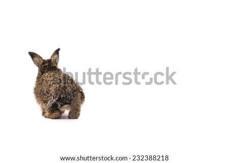 Adorable rabbit isolated on a white background - stock photo