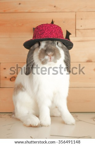 Adorable Rabbit isolated on wooden background dressed up for New Year Party, Holland Lop Pure Breed, Selective Focus - stock photo