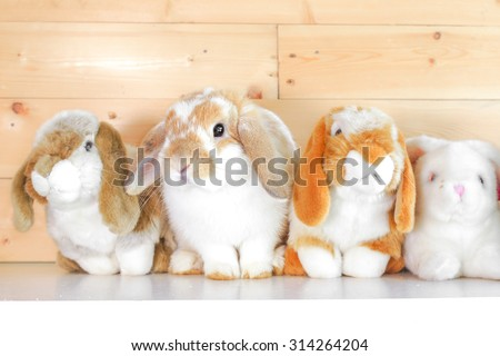 Adorable Rabbit on Shelf with Other Rabbit Soft Plush Dolls, Holland Lop Pure Breed, Selective Focus  - stock photo