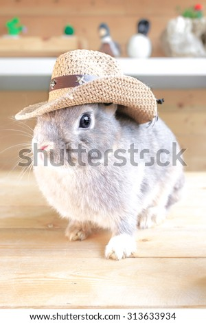 Adorable Rabbit wearing a Cowboy Hat, Netherland Dwarf rabbit Pure Breed, Selective Focus - stock photo