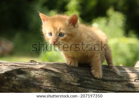 Adorable red kitten climbing the tree branches