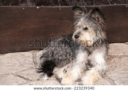 Adorable shaggy stray dog on stone pavement