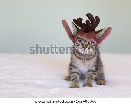 adorable shorthair tabby kitten wearing a Christmas reindeer hat - stock photo