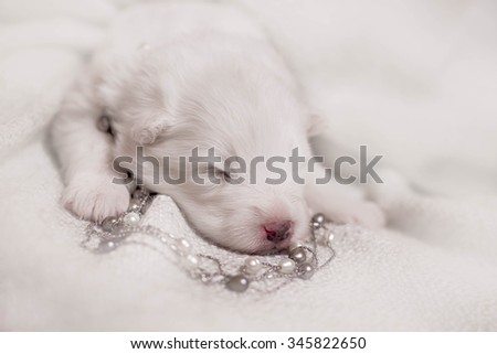 Adorable sleeping puppy, 1 week old puppy - stock photo