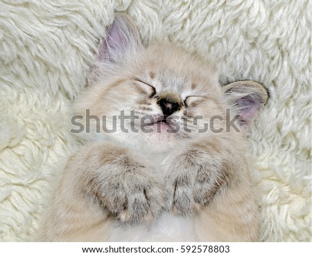 Adorable small kitten taking a nap on his back with his paws curled up under his chin.