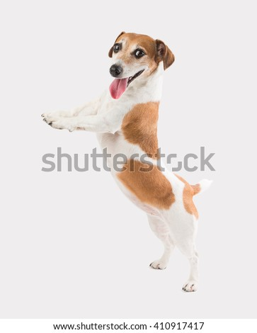 Adorable smiling dog standing on hind paws, looking at the camera and holding. Template for placing your product goods ad