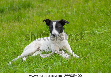 Adorable stray dog lying in spring grass