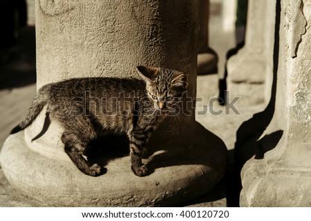 adorable sweet little kitten - stock photo