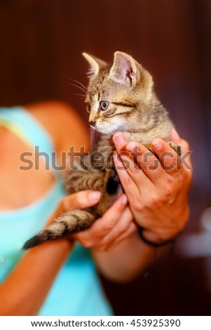 adorable sweet little pussycat in hands of young girl