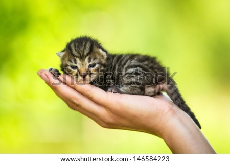 Adorable tabby kitten on the palm