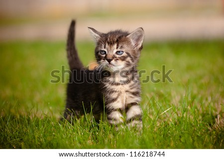 adorable tabby kitten outdoors - stock photo
