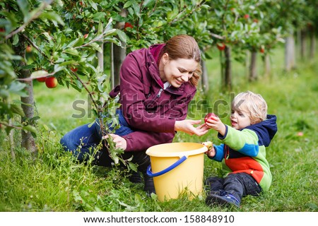 Adorable toddler boy of two years and his mother picking red apples in an orchard.