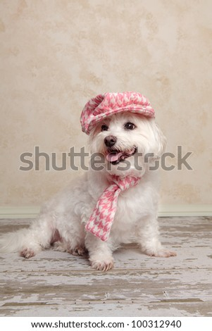 Adorable trendy little dog wearing a pink houndstooth cap and matching scarf is sitting on an old wooden floor - stock photo