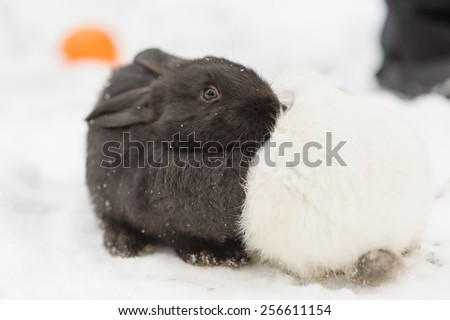 Adorable two bunnies black and white colors