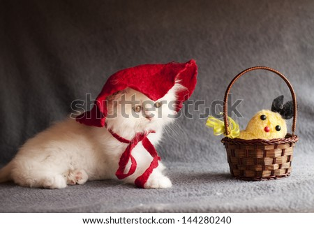 Adorable white Persian kitten as Little Red Riding Hood