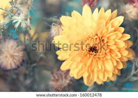 adorable yellow aster close up - stock photo
