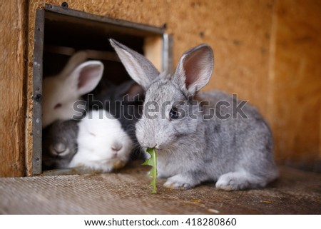 Adorable young bunny in a big wood cage at farm house. Cute small rabbit in hutch - stock photo