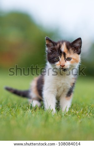 adorable young cat in the grass - stock photo