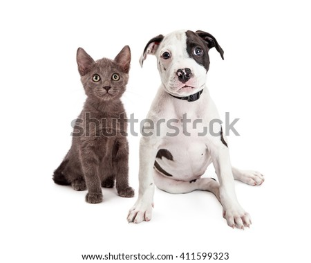 Adorable young kitten and terrier puppy sitting together on white background