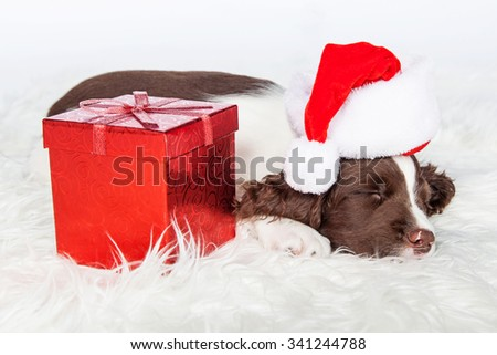 Adorable young puppy wearing Christmas Santa Claus hat sleeping next to a gift wrapped in red. - stock photo