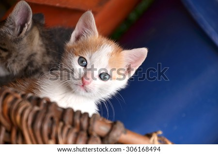 Adoreble and lovely cat with brown basket  - stock photo