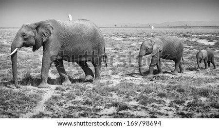 Adult and baby elephants - stock photo